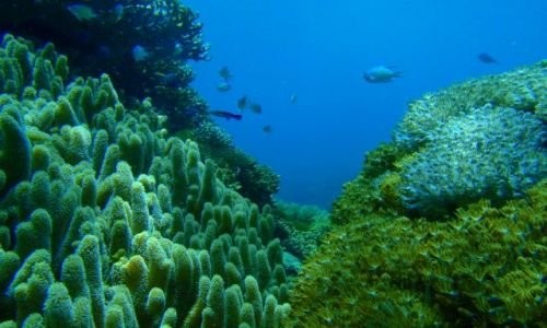 Zdjecie FILIPINY / brak / Wyspa Ticao / Filipiny podwodne