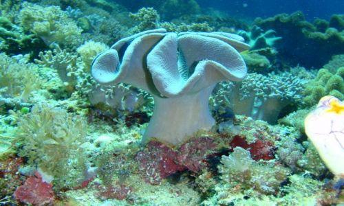 Zdjecie FILIPINY / brak / Wyspa Ticao / Podwodna łąka