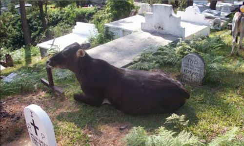 Zdjecie FILIPINY / sagada / cmentarz / po drodze do wiszacych trumien