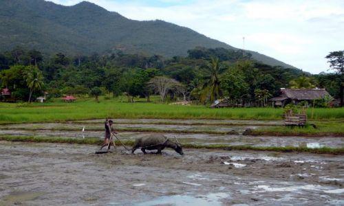 Zdjęcie FILIPINY / Puerta Princesa / wieś / co tu mówić o szkole