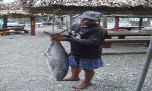 Zdjecie FILIPINY / Luzon / Donsol / Ryba