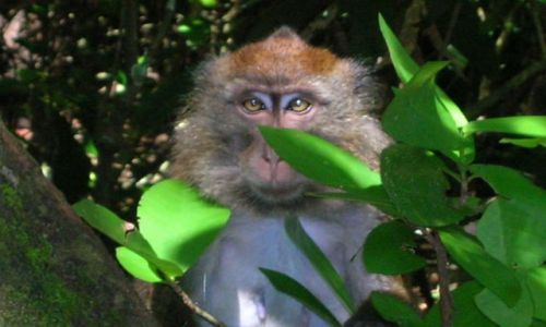Zdjecie FILIPINY / Palawan / Sabang / Monkey Trail
