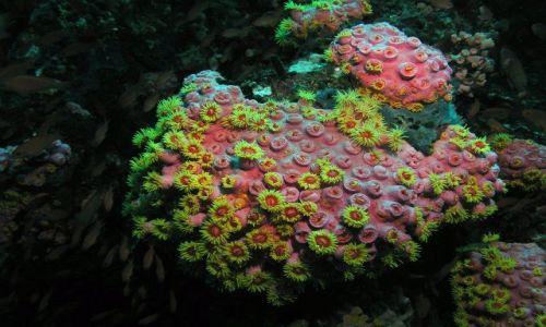 Zdjęcie FILIPINY / Mindoro / Sabang / Podwodny świat