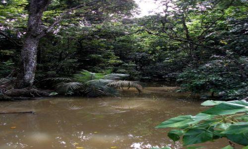 Zdjecie FILIPINY / Palawan / Sabang i okolice / ... dżungla ....