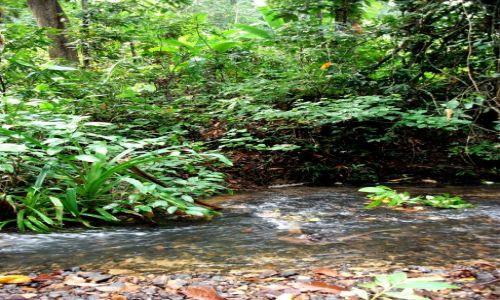 FILIPINY / Palawan / okolice El Nido ... / ... strumieniem przez dżunglę ...
