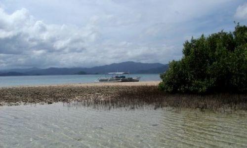 Zdjęcie FILIPINY / Palawan / Port Barton, okolice / ... mangrowa laguna ...