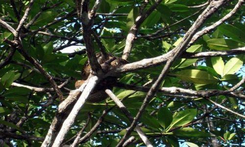 Zdjecie FILIPINY / Palawan / Sabang i okolice / ... sjesta na gałęzi ...