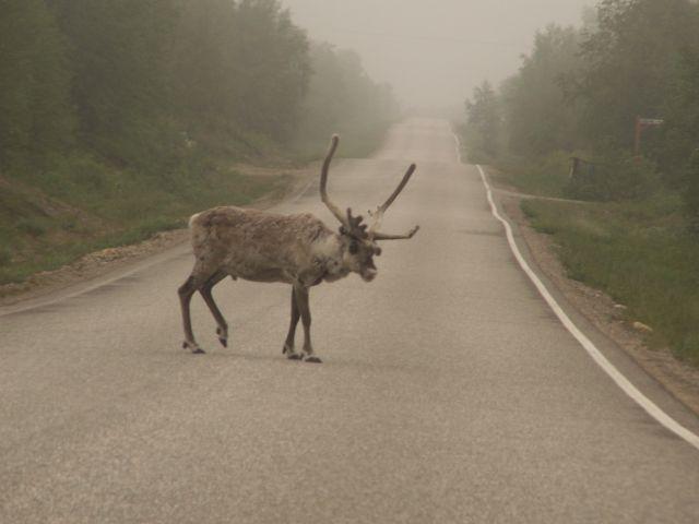 Zdjęcia: Finlandia, W drodze na Nordkapp, Wyprawa na Nordkapp, FINLANDIA