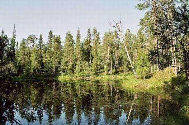 Zdjęcia: Park Narodowy Oulanka, Lustra Oulanki, FINLANDIA