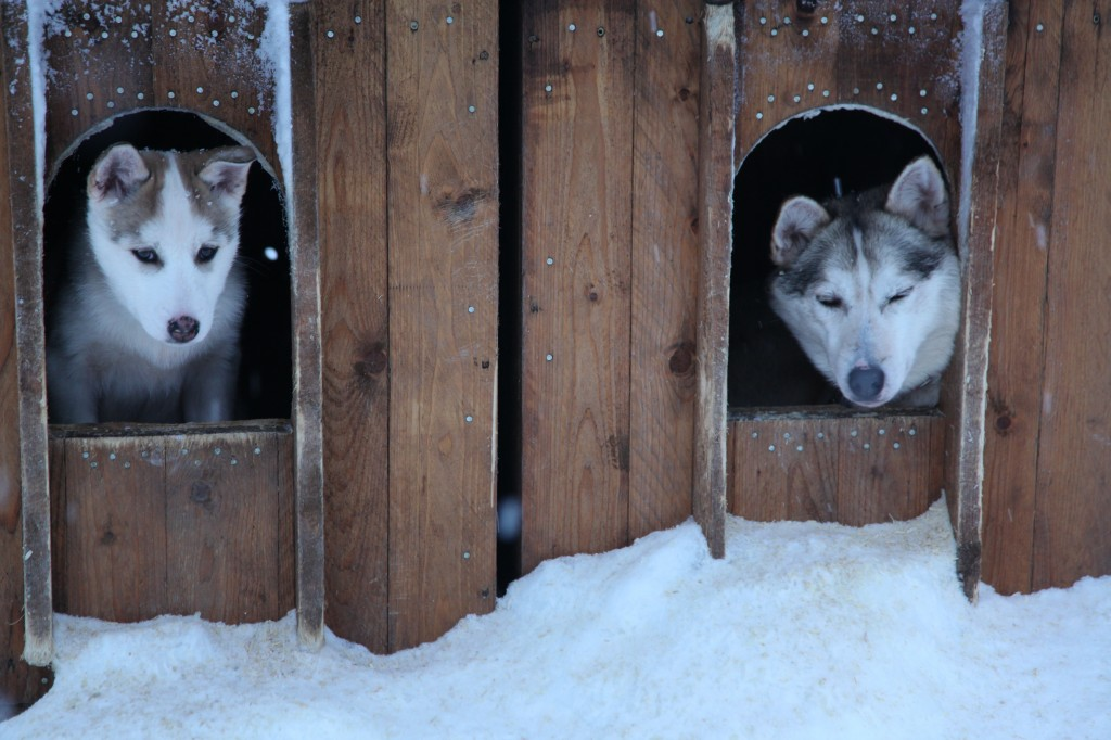 Zdjęcia: Rovaniemi, Laponia, A kuku, FINLANDIA