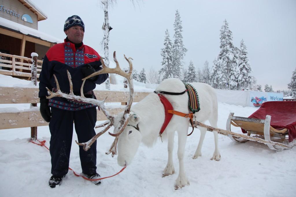 Zdjęcia: Rovaniemi, Laponia, Arktyczny zaprzęg, FINLANDIA