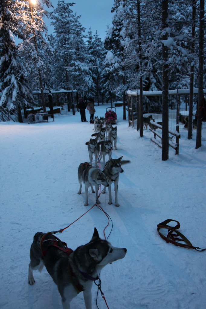 Zdjęcia: Rovaniemi, Laponia, Zerwał się z uprzęży, FINLANDIA