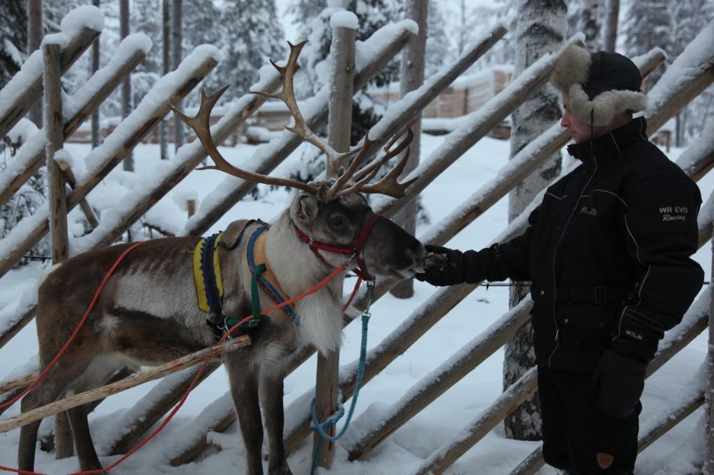 Zdjęcia: Rovaniemi, Laponia, Przysmak, czyli chrobotek, FINLANDIA