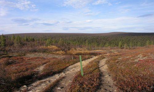 Zdjecie FINLANDIA / Laponia / saariselka / Laponia