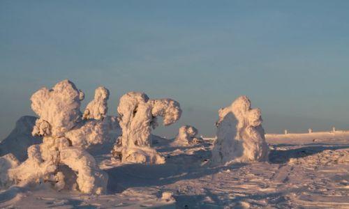 Zdjecie FINLANDIA / Laponia / za kolem polarnym / białe drzewa