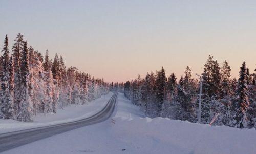 FINLANDIA / Północ Finlandii / Laponia / Droga wśród lapońskich świerków