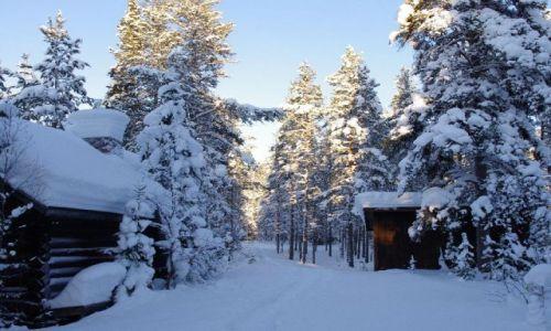 FINLANDIA / Północ Finlandii / Laponia / Wśród bieli