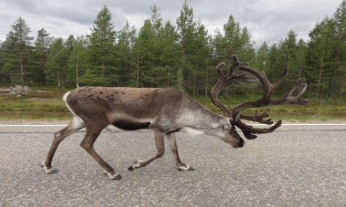 Zdjecie FINLANDIA / Rovaniemi / Rovaniemi / w drodze na nordkapp