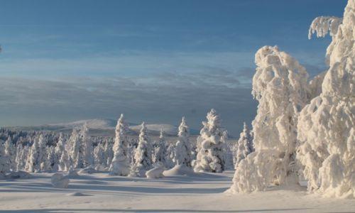 Zdjecie FINLANDIA / laponia / okolice parku Yllas / prawdziwa zima