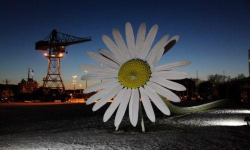 Zdjęcie FINLANDIA / Varsinais-Suomi / Turku / Stokrotka w porcie