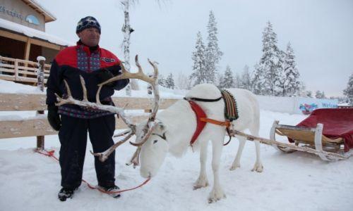 FINLANDIA / Laponia / Rovaniemi / Arktyczny zaprzęg