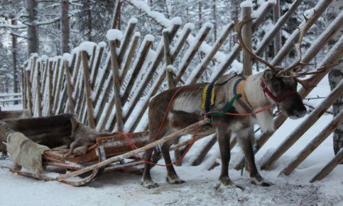 Zdjęcie FINLANDIA / Laponia / Rovaniemi / Taxi z rogatym napędem