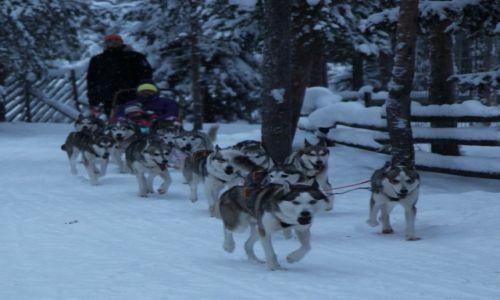 Zdjęcie FINLANDIA / Laponia / Rovaniemi, Husky park / Zaprzęg