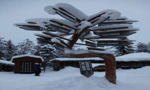 Zdjęcie FINLANDIA / Laponia / Rovaniemi, Husky park / Jak daleko stąd, jak blisko