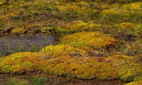 Zdjęcie FINLANDIA / Laponia / Napapiri / kolory trzęsawisk