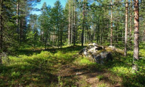 Zdjęcie FINLANDIA / Laponia / Napapiri / las świętego Mikołaja