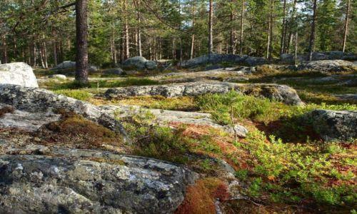 Zdjęcie FINLANDIA / Laponia / Rovaniemi / w fińskim lesie 3