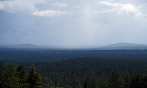 FINLANDIA / Laponia / Pyha-Luosto / Lapońska tajga