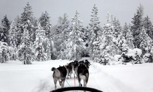 Zdjęcie FINLANDIA / Laponia / Rovaniemi  / Mój zaprzęg