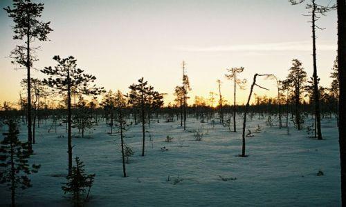 Zdjęcie FINLANDIA / LAPLAND / Okolica Rovaniemi / FIŃSKIE KLIMATY