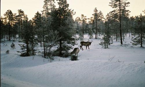 Zdjęcie FINLANDIA / LAPLAND / SRODKOWY LAPLAND / FIŃSKIE KLIMATY
