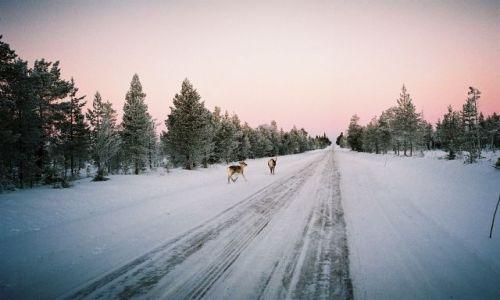 Zdjecie FINLANDIA / LAPLAND / ŚRODKOWY LAPLAND / FIŃSKIE KLIMATY