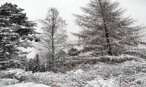 FINLANDIA / Środkowa Finlandia / Himos / Zimowy las