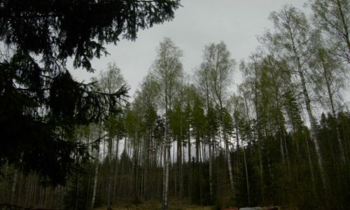 FINLANDIA / południe kraju / valkeakoski / lasy