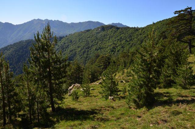 Zdjęcia: Capanelle-Prati, Korsyka, Na szlaku_10_1, FRANCJA