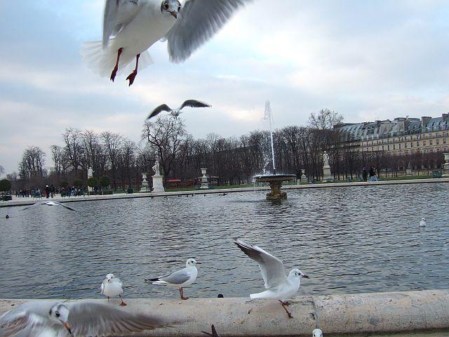 Zdjęcia: Paryż, Francja, w ogrodach  Tuileries , FRANCJA