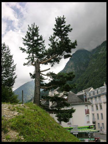 Zdjęcia: Cauterets, Midi-Pyrénées, Sosna, FRANCJA