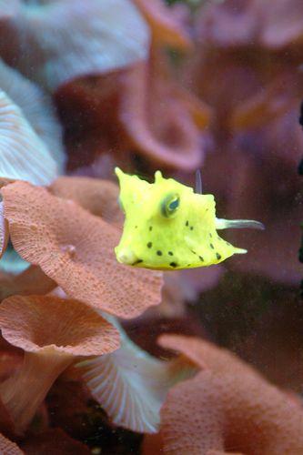 Zdjęcia: Akwarium morskie w Agde, Langwedocja, żółto-zielony potwór !, FRANCJA