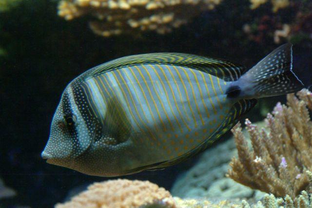 Zdjęcia: Akwarium morskie w Agde, Langwedocja, ryba , FRANCJA
