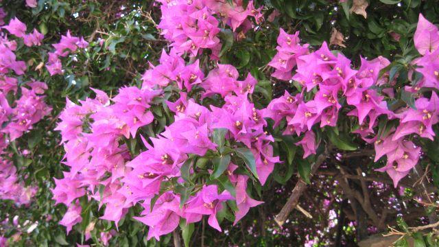 Zdjęcia: wędrując po okolicy, Langwedocja, Kwiaty południowej Europy, FRANCJA
