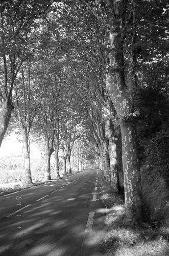 Zdj�cia: Po�udniowa Francja, Po�udniowofrancuska droga, FRANCJA