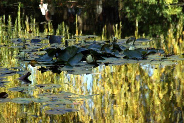 Zdjęcia: Giverny, Normandia, Monet... i jego ogrody, FRANCJA