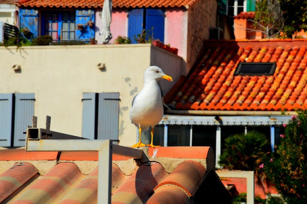 Zdjęcia: Marsylia, Prowansja, Kolorowa Marsylia, FRANCJA