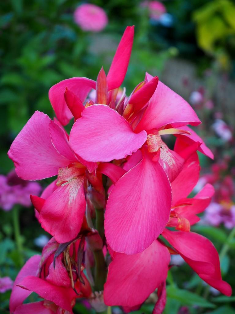 Zdj cia jardin dominique alexandre godron nancy lotaryngia w ogrodzie dominique francja - Jardin dominique alexandre godron ...