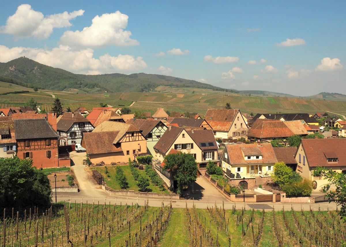 Zdjęcia: Hunawihr, Alzacja, dookoła... winnice:), FRANCJA