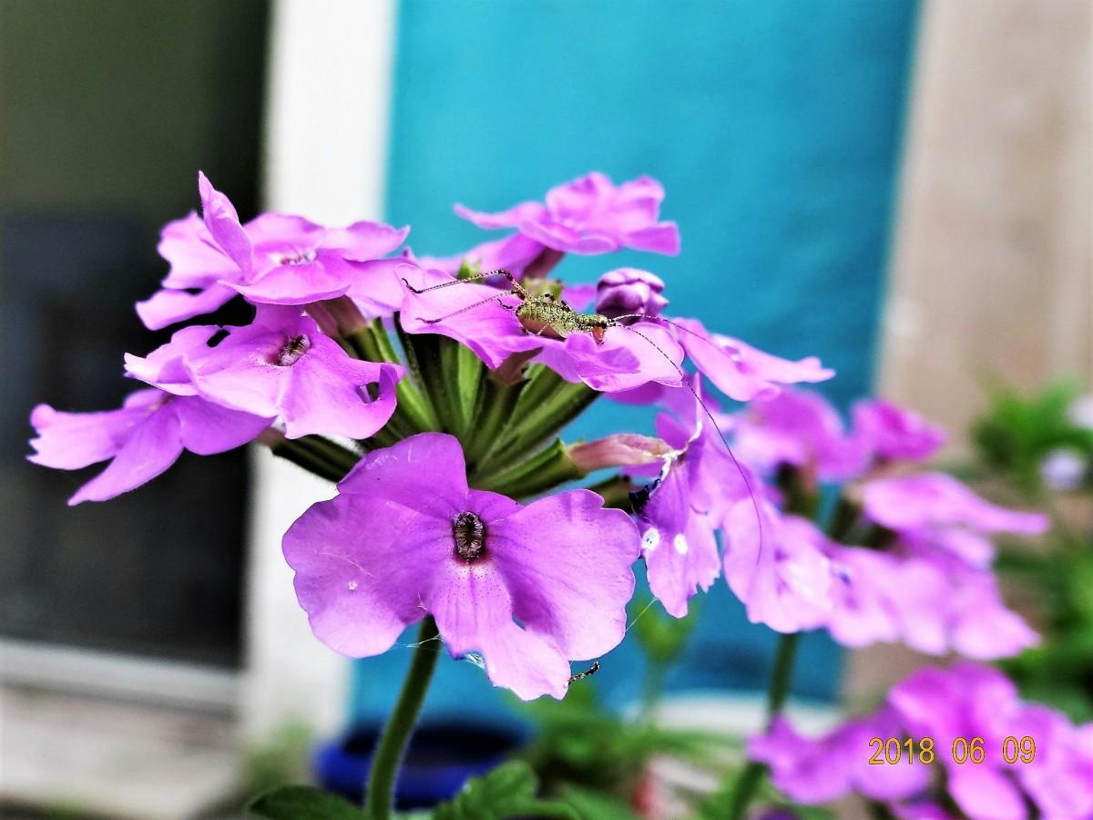 Zdjęcia: j.w., Nantes, Kwiatek z niespodzianką, FRANCJA